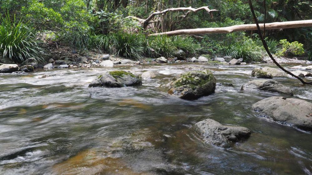 Fallen log over fast-flowing creek