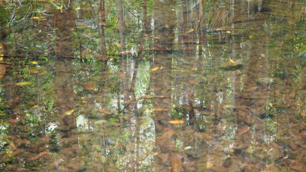 Trees reflected in shallow creek crossing