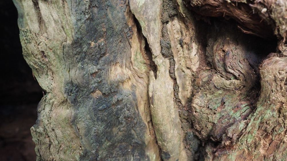 Detail of bark and old wood