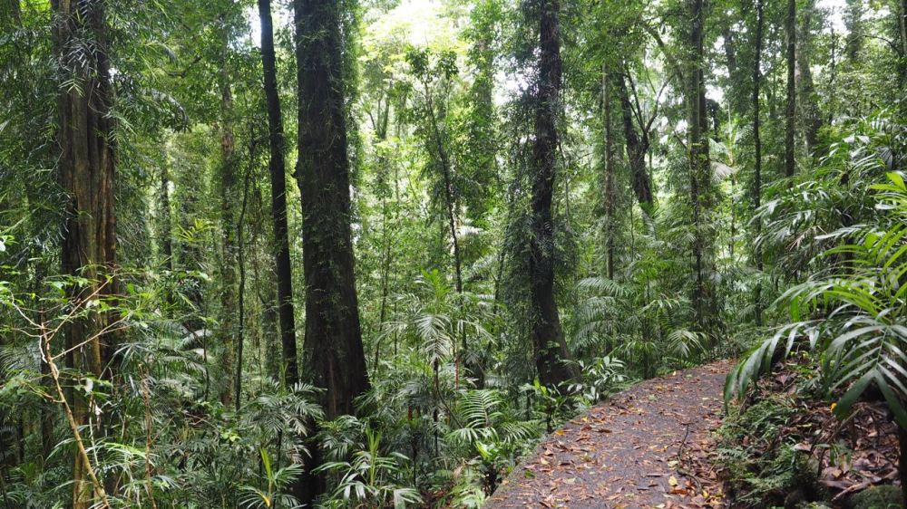 View of path through Dorrigo National Park
