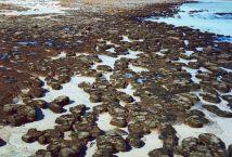 Stromatolites, Hamelin Pool. W.A.